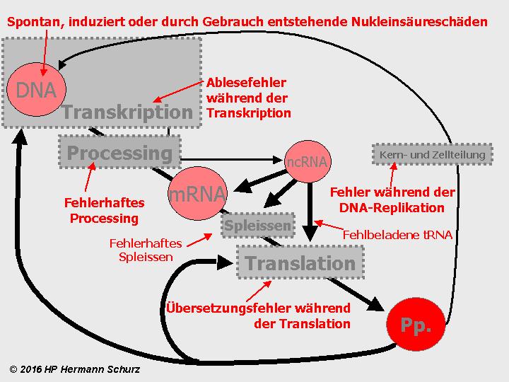 Fantastisch DNA Transkription Und Translation Arbeitsblatt Bilder ...
